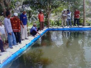 Budidaya Ikan Lele di Kolam Terpal
